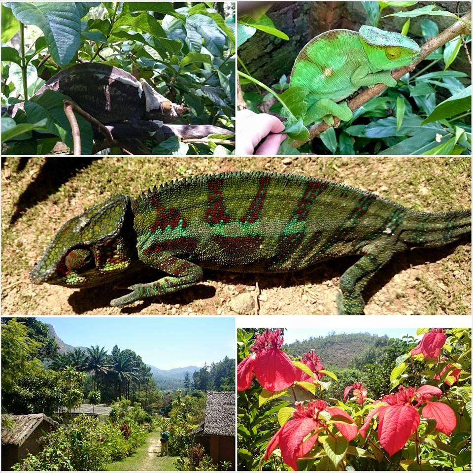 P.N. Andasibe & Tierras Altas de Madagascar.