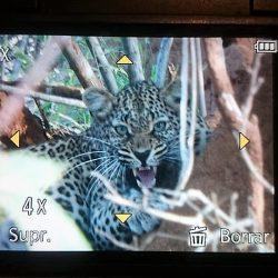 Sudáfrica. Safari Reserva Privada Parque Kruguer