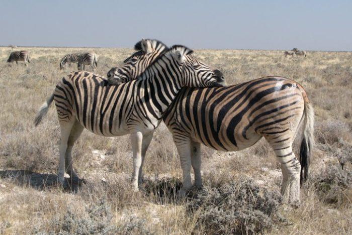 Guía de viaje a Namibia