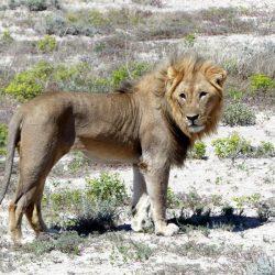 Parque Nacional Etosha en Namibia