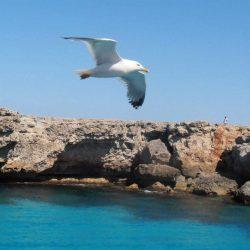 Playas del sur de Menorca y Ciutadella