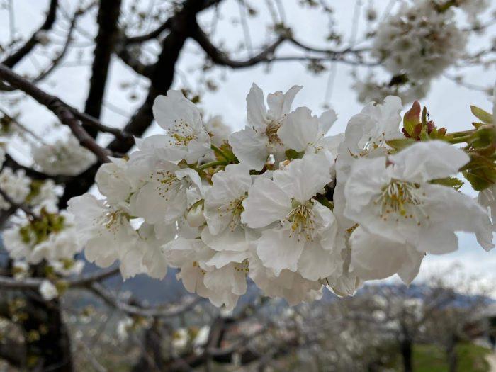 Escapada primaveral a Cáceres
