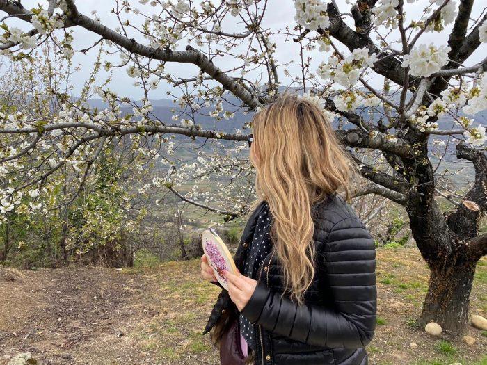 La floración del cerezo en el Valle del Jerte