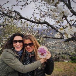 Bordado del cerezo en el Jerte, Extremadura