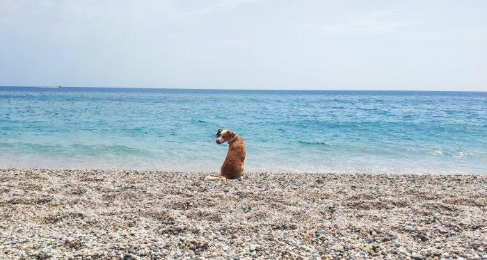 Playas de Cabo de Gata con Mascotas